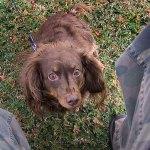 This is Ethel's dog Winnie.