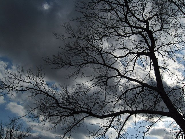 This eery tree stands fast against the gathering clouds. Soon it will be green.