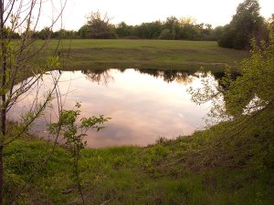 The pond, which was completely gone last September, actually looks like a body of water again.