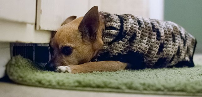 It's that time of year: despite wearing one of Abby's handmade dog sweaters, Max still gets cold, and often camps out by the vent in my bathroom when the furnace is running.