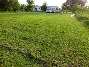 I love the way the yard looks right after I mow it, in evening light. It looks like a green and gold carpet.