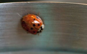 This is the ladybug Abby was carefully guiding, finally lighting on a metal container she uses to hold crochet clips.