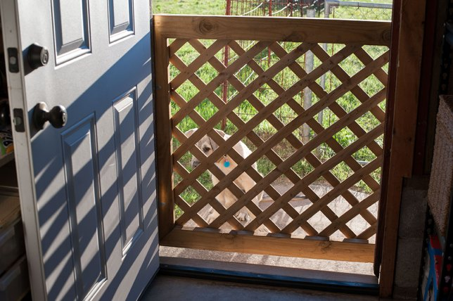 I installed this gate to let the breeze and light into the garage when I work out there, and still keep Hawken safe in the back yard.