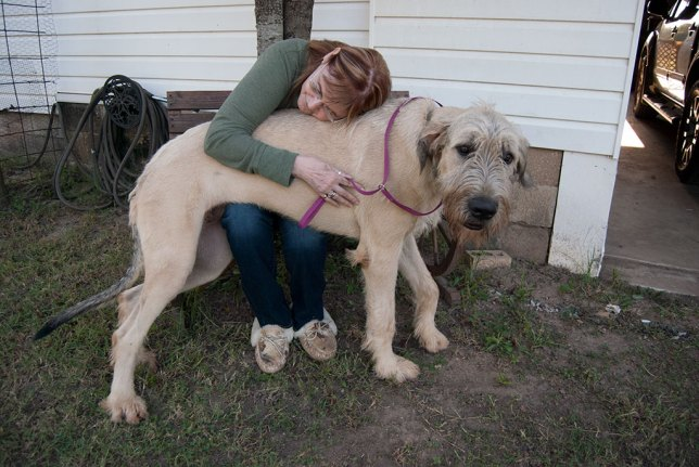 Abby puts her arms around Hawken the Irish Wolfhound a couple of night ago. He is now nine months old and weighs 135 pounds.