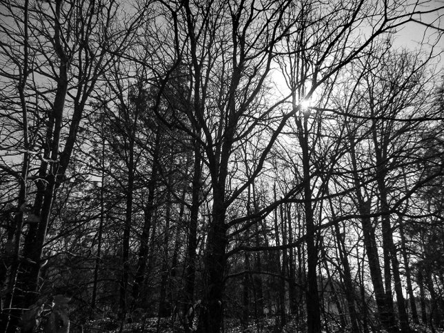 Winter sun shines through trees in the woods far behind our house on my walk with Hawken the Wolfhound.
