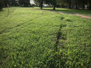 "These are the ""tracks"" the deputy left in the grass by the driveway, which are barely noticeable."