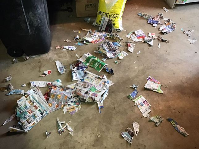 While I worked on putting boxes in the rafters in the garage, Hawken the Irish Wolfhound vigorously shredded these newspaper inserts he dug out of the trash. In some ways, this act made more sense than any I have witnessed in years. Good boy, Hawken.