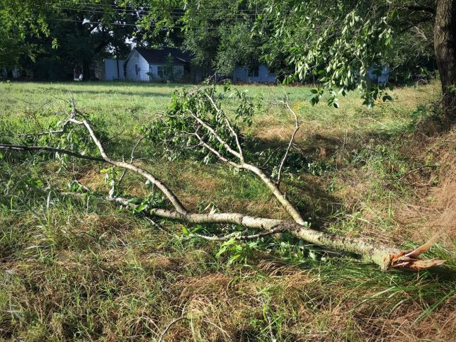 We were fortunate at our home in Byng that we only had a few branches blown down, and none of the garden or the peach trees were affected. Some areas had more dramatic damage, and power was out throughout the region for more than 15,000 customers at one point.