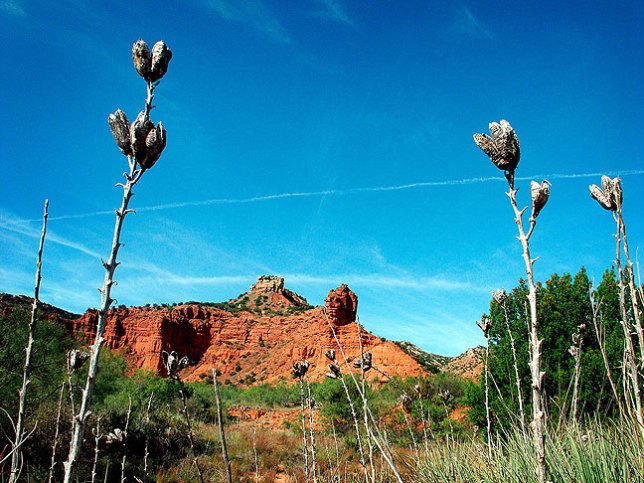 On the Trail at Caprock