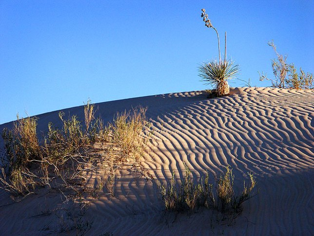 The gypsum dunes at Guadalupe Mountains National Park take on evening light.
