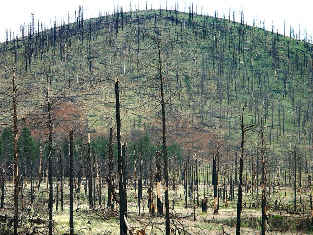 Fire damage created this impressive, stark scene in the Kabab National Forest.