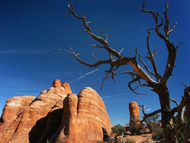 Dead tree, fins and sky, Devil's Garden trail