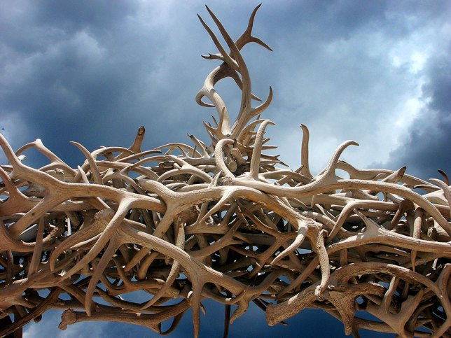 I spotted this antler archway on my drive to Black Canyon of the Gunnison.