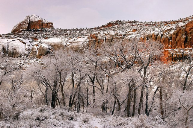 The snow in Indian Creek on the way to Canyonlands was light and wet, and melted off by 9 am.