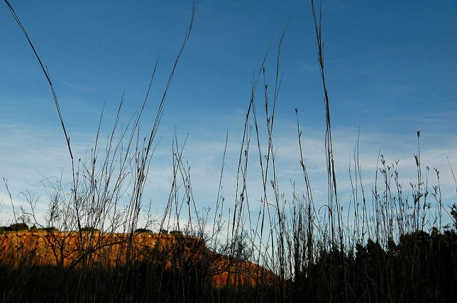 Grass and Cliffs, Late Afternoon
