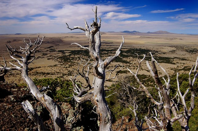 This dead tree graces the rim trail at Capulin Volcano National Monument in northeastern New Mexico.