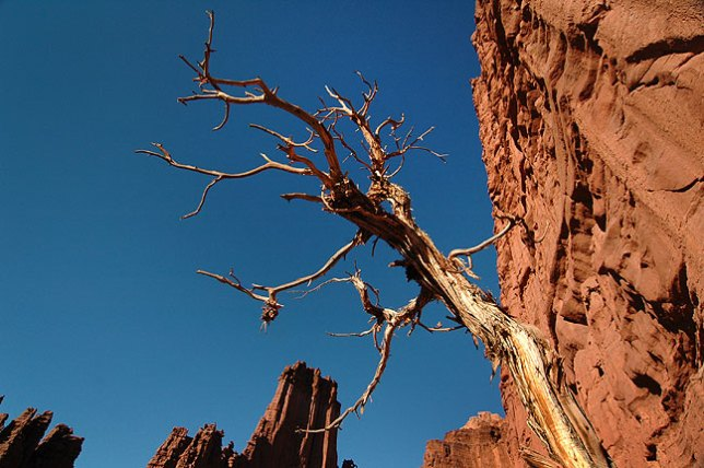 A tree clings to the face of a cliff on the Fisher Towers trail.