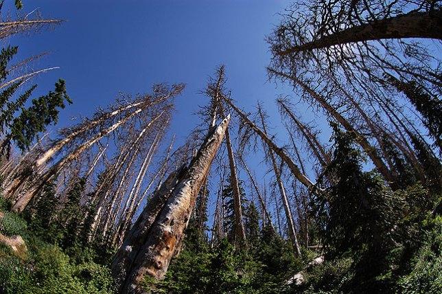 Alpine Pond trail, Cedar Breaks.
