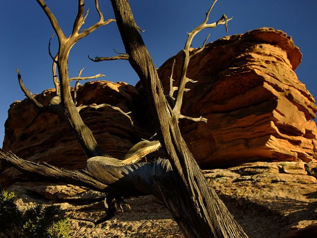 Tree branches and sandstone cliff in maturing light.