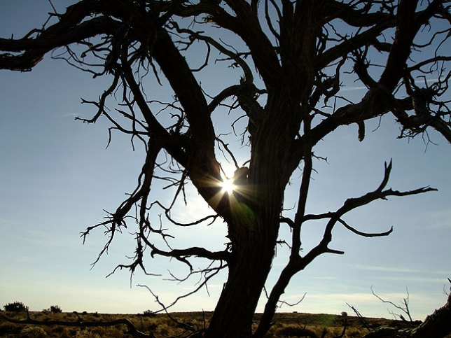 There is only one tree along the South Mesa trail. I photograph this solitary landmark ever time I hike past it.