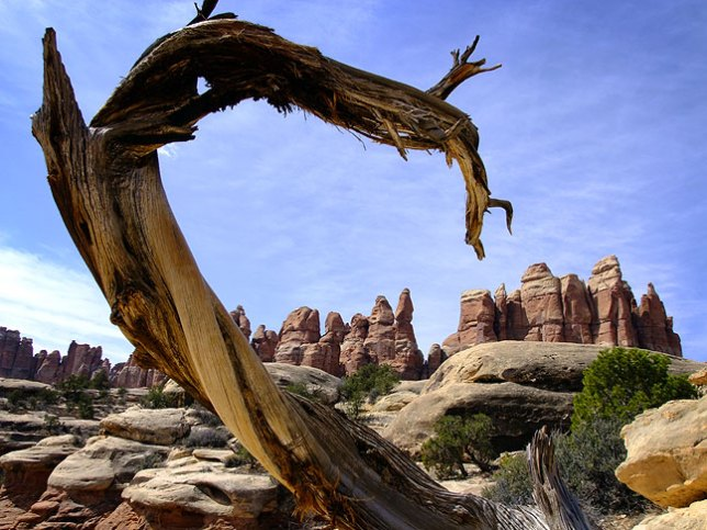 A long-dead tree branch frames pinnacles for which the Needles District is named. This ended up being one of my favorite images from this trip.