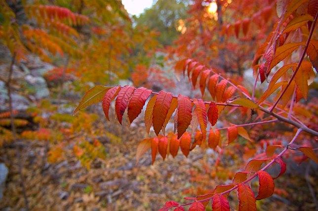 More beautiful foliage on the trail.