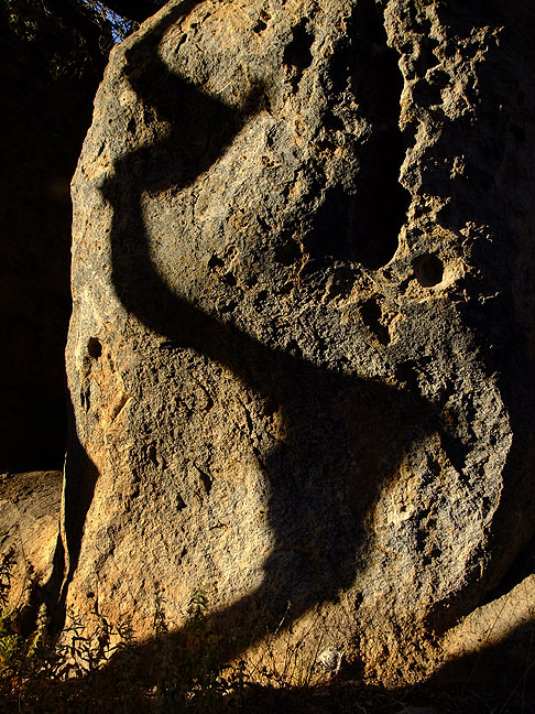 A tree casts a shadow on stone as sunset approaches.