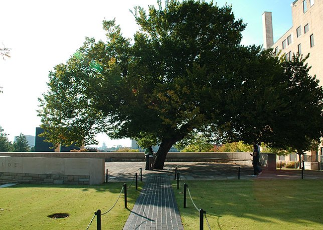 "The ""Survivor Tree"" (Photo by Abby S. M. Barron)"