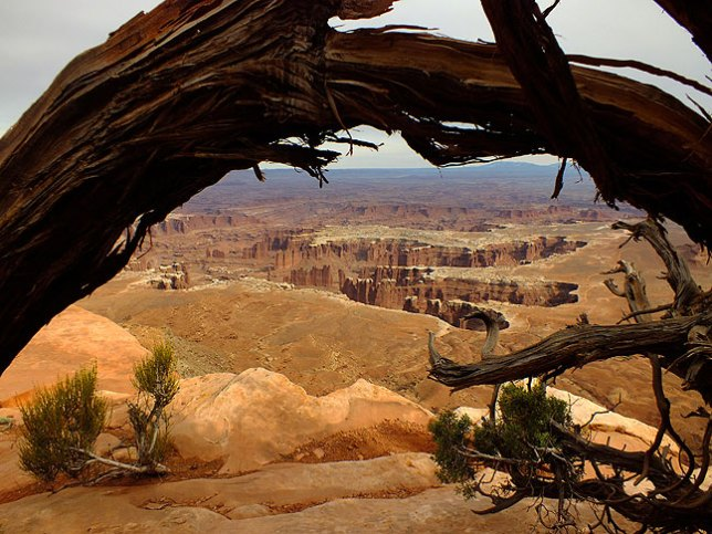 A dead tree branch serves as a natural frame for this view of Monument Basin seen from the Grand View Point trail at Canyonlands.