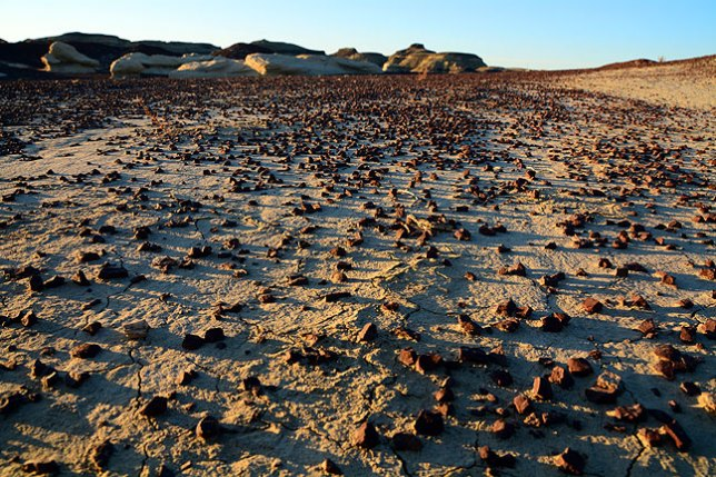 Iron-rich, pebble-sized stones cling to the ground near Bisti's Alamo Wash.