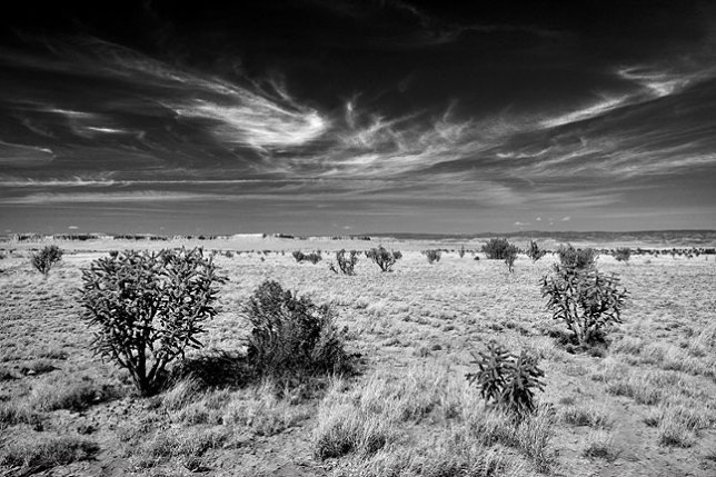 This image, made near Cabezon Peak, seems to convey the essence of the high desert of New Mexico.