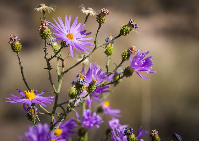 Wildflowers take in clear morning sunshine on the Canyon National Recreation Trail at Bosque del Apache National Wildlife Refuge.