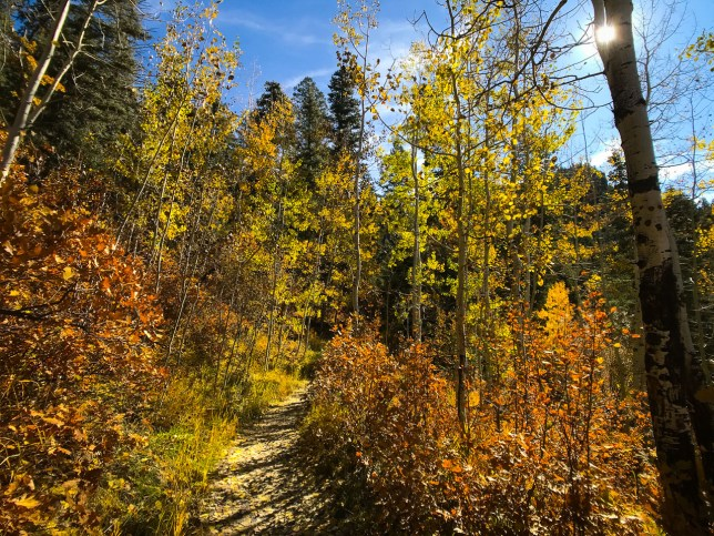 A short side trail at Treasure falls cut through beautiful high country woods to an overlook.