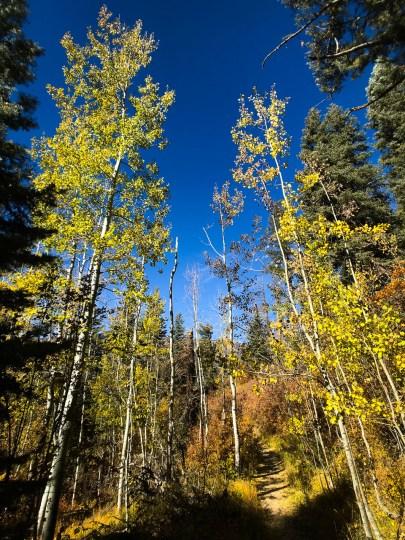 Trees near Treasure Falls are set against a perfect autumn sky. Trees near Treasure Falls are set against a perfect autumn sky.