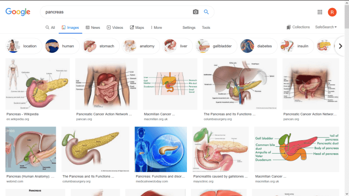 screenshot of the google image search website