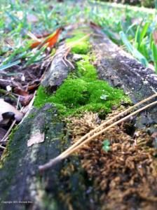 Moss on a rotting log.