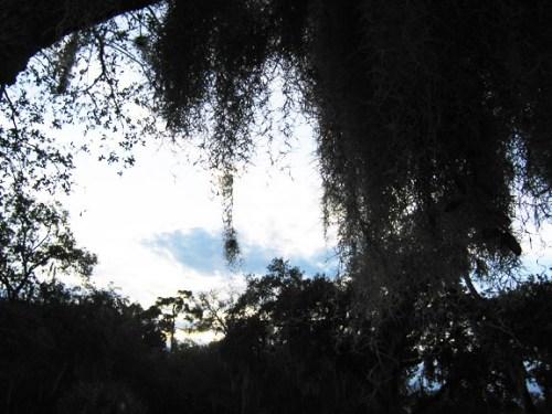 Spooky Sky, Moss x