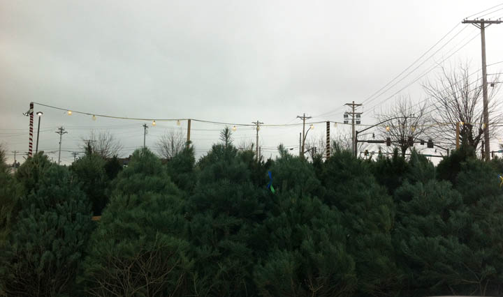 christmas-tree-lot-columbus-ohx