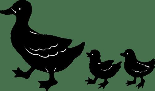 duck-46061_1280