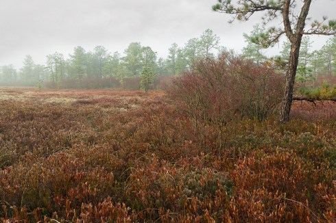 New Jersey Pinelands Photography