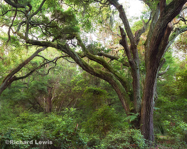 Intimate Florida Forest by Richard Lewis