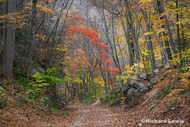 Tree Arch At The Ken Lockwood Preserve by Richard Lewis