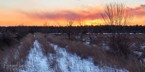 Winter Sunset in the Pine Barrens