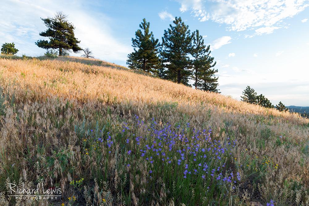 Mountain Top Blossoms Boulder Colorado