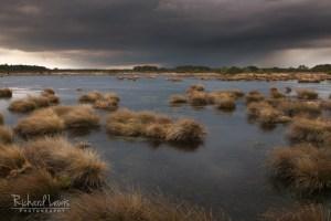 Approaching Storm Pine Barrens New Jersey