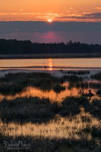 Sunset In Layers Pine Barrens