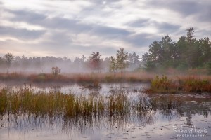 Pine Barrens Mullica River Mist
