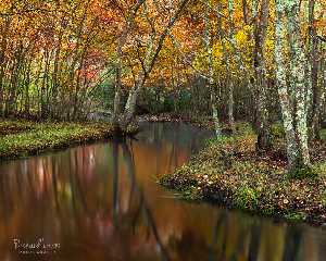 Pine Barrens Fall Reflections