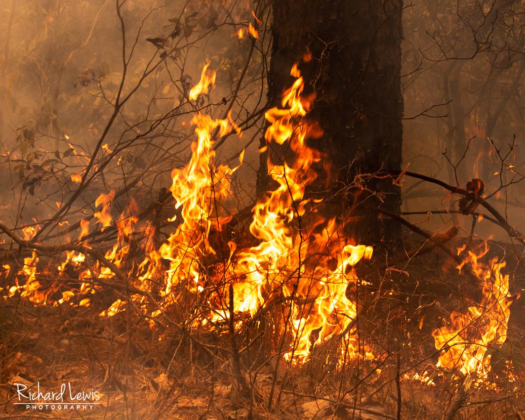 Pinelands Fire