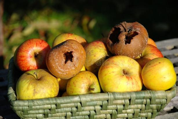 rotte-appels